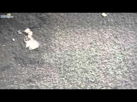 enlever un chewing gum d'un tapis