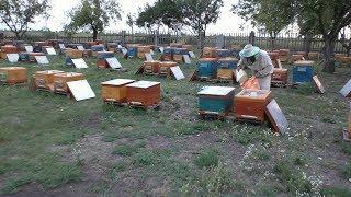 Механизация на пасеке . Закорм сиропом пчёл в зиму .