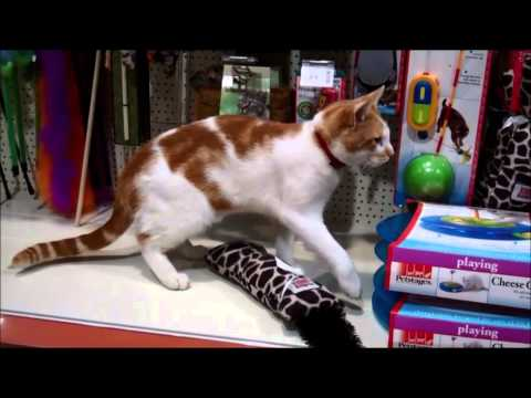 Cat Loves the Pet Shop