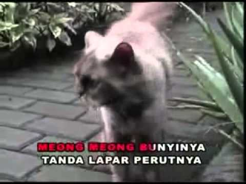 Lagu Anak Anak ~ Kucing Belang Tiga