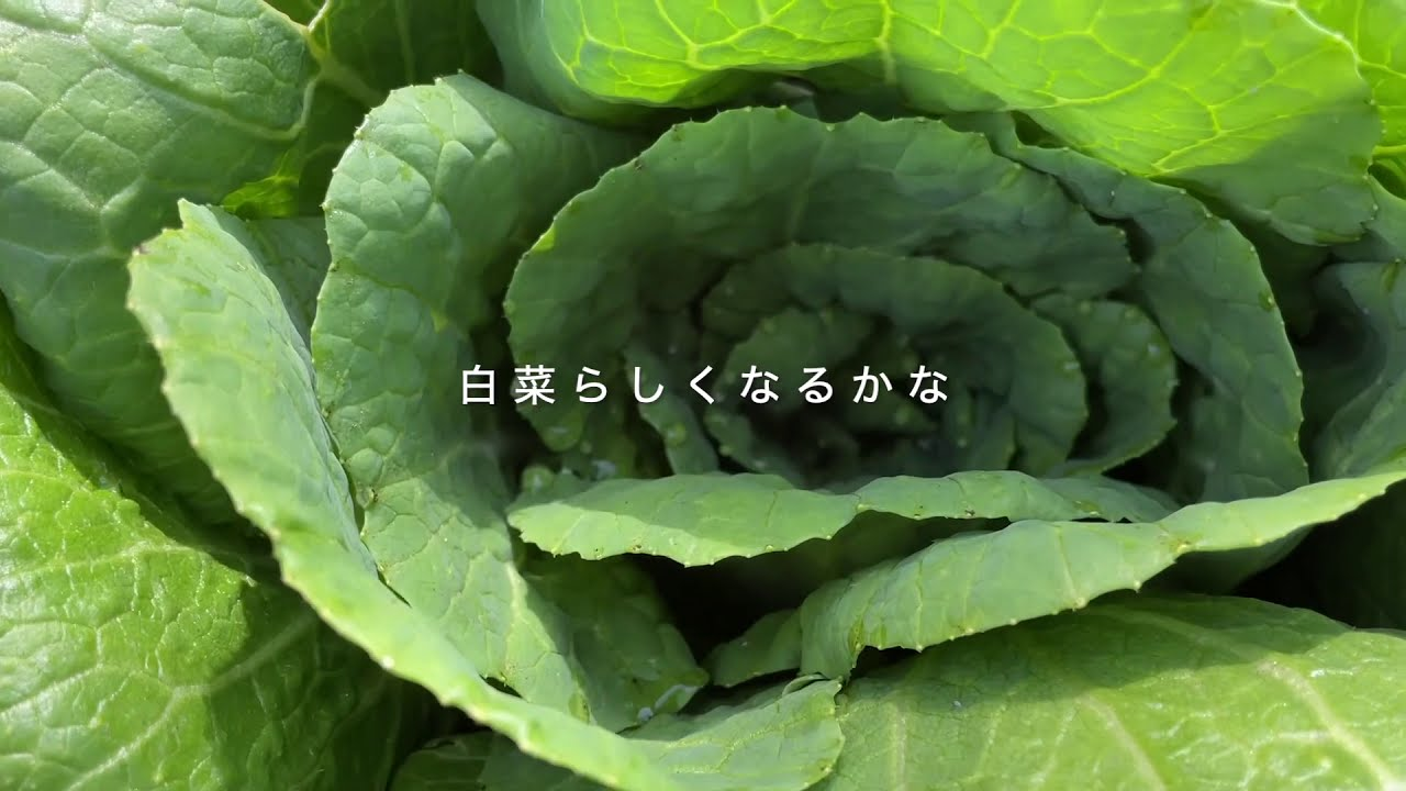 森歩き日記 Vol.20「A Small Green Recovery」