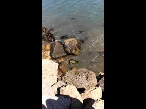 Shark fishing in Malibu Ca.fishing@ It's finest