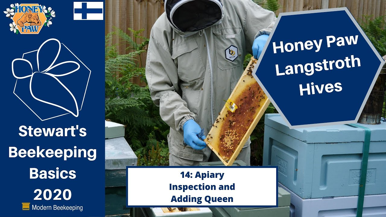 Honey Paw 14 | Apiary Inspection and Adding Queen - Stewart Spinks at the Norfolk Honey Co.