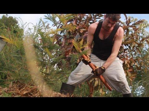 Digging A Fruit Tree Hole In Satya Yuga