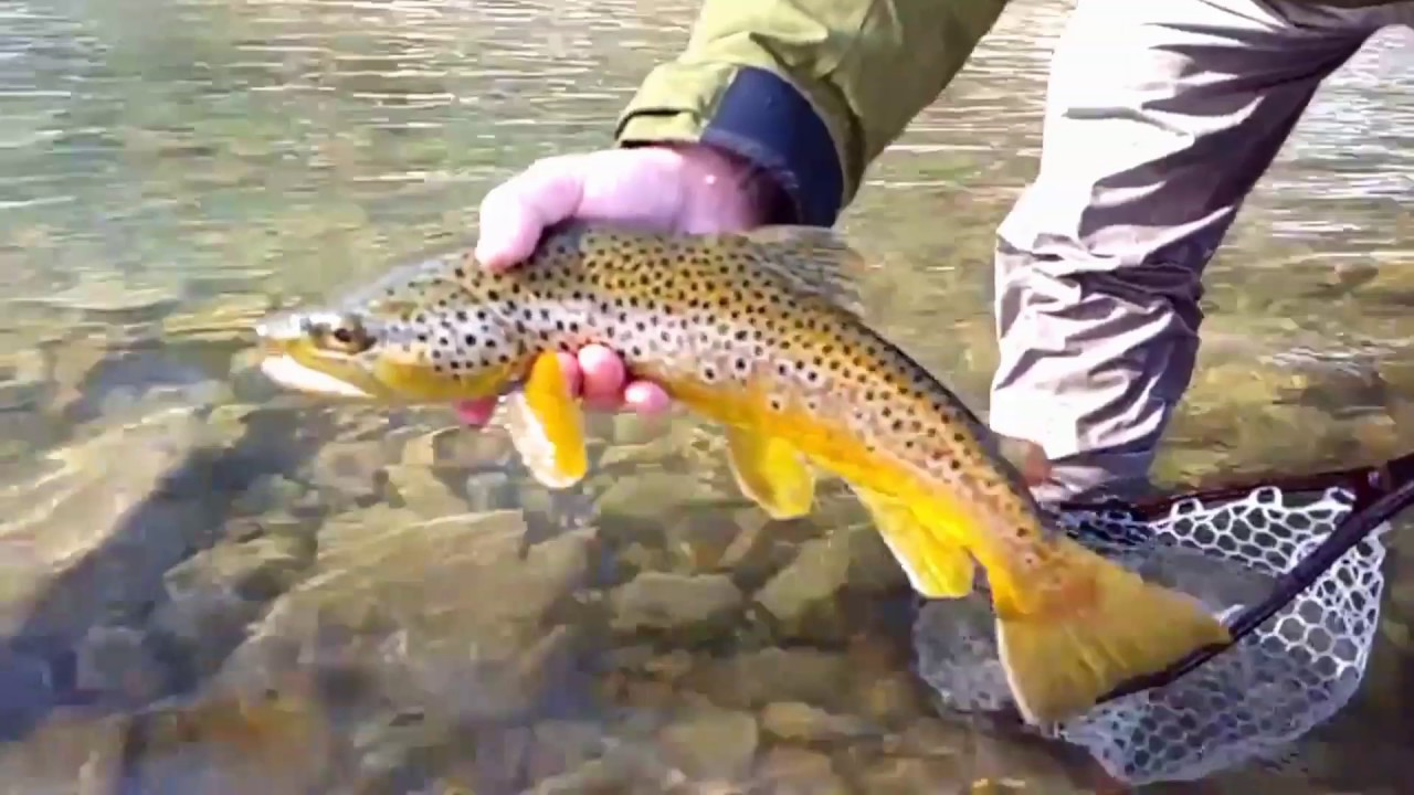 Chasing tails fly fishing youtube for Chasing tails fishing report