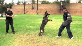 24 Hours At Falco K9 Academy