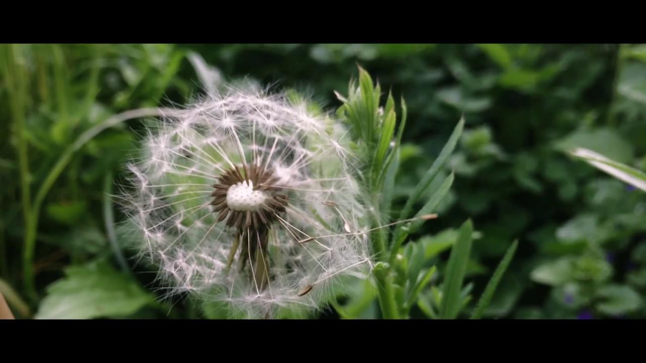 The Sunlight Garden   Short iPhone Film (2017)