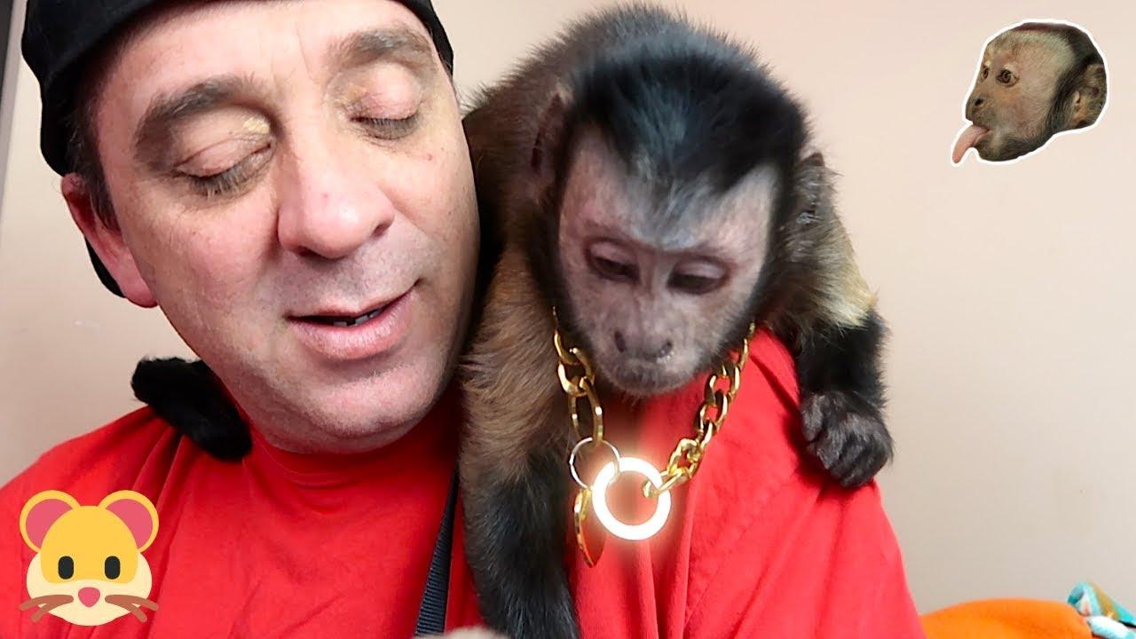 monkey-hamster-fur-buddies