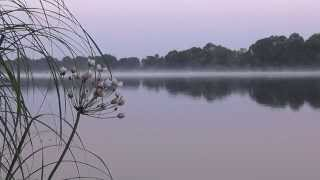 Раннее утро. Река. Цветок. Релакс. Медитация. Early morning. fog. river. relaxation and meditation