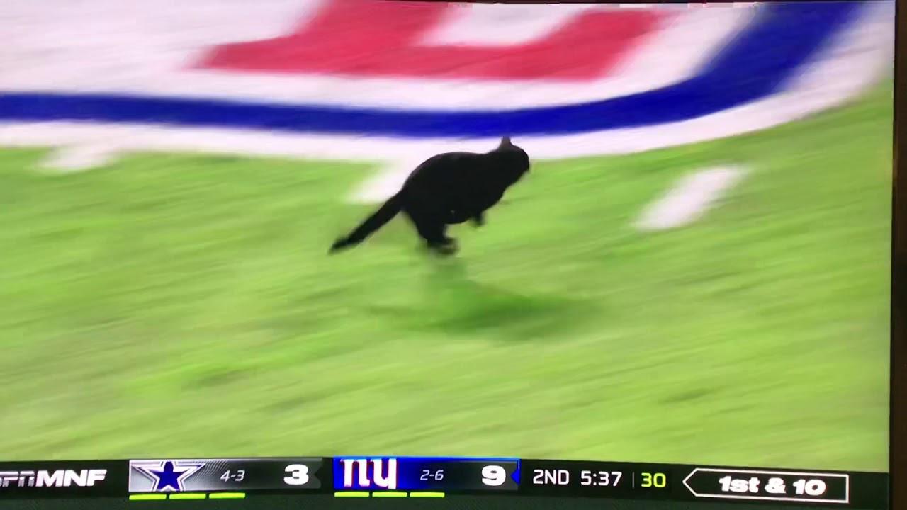 Black Cat On The Field Cowboys Vs Giants Monday Night Football Youtube
