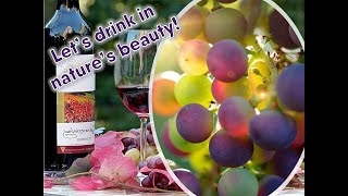 Flrysh Eco-Talk Show - Eco-footprints, Wine and Nature Tours
