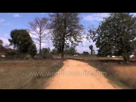 Travelling from Jabalpur to the Kanha Earth Lodge