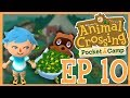 Let's Play Pocket Camp EP 10! Animal Crossing: Pocket Camp Daily Adventure!