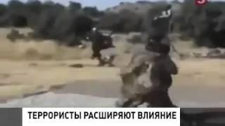 Казни ИГИЛ Новости 19 08
