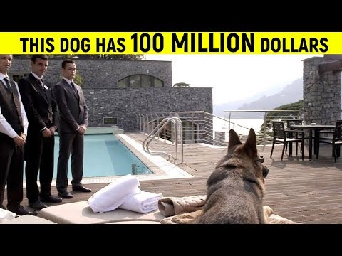 10 Most Richest Animals In The World