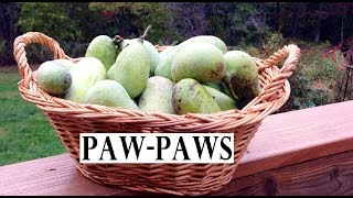 A VERY FUN Paw-Paw Fruit Hunt!!! (Time-Lapse!!!)