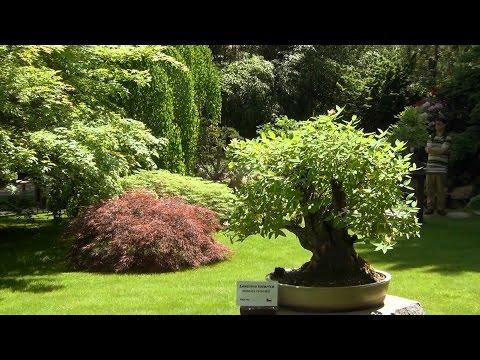 познакомлюсь ботанический сад