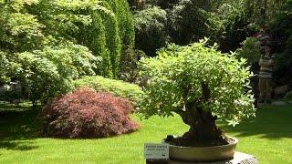 Пражский ботанический сад. Выставка бонсай.