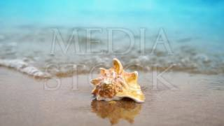 Seashell on sand ocean beach in the light of sun with waves backround