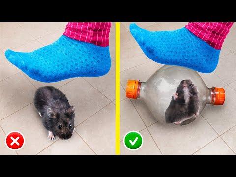 13 Mẹo Tự Làm Đồ Thủ Công Sáng Tạo Cho Hamster!