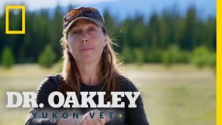 How to Protect a Horse's Eyes (Deleted Scene)   Dr. Oakley, Yukon Vet