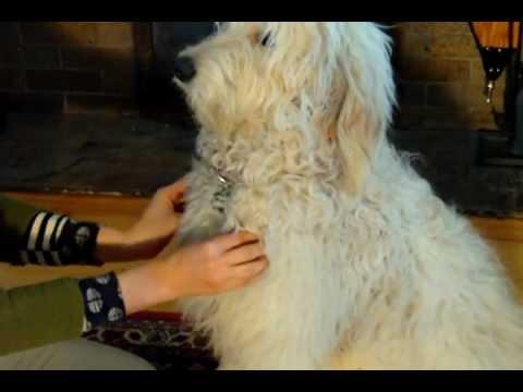 Lymph Nodes - YouTube