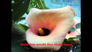 Подарок на день рождение Бабушки...(Видео., 2010-10-19T19:36:01.000Z)