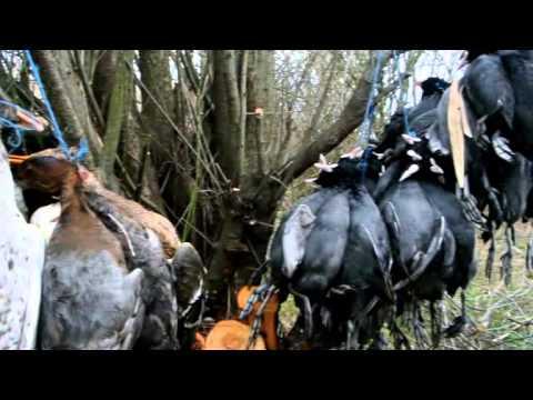 Caccia alle anatre in vojvodina 3 hunting ducks in for Capanno invisibile