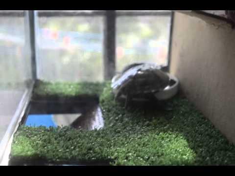 Pecera acuaterrario para tortugas youtube for Peceras para tortugas