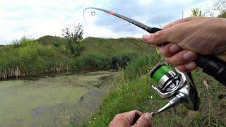 ДА сколько здесь РЫБЫ в этом БОЛОТЕ Рыбалка на спиннинг
