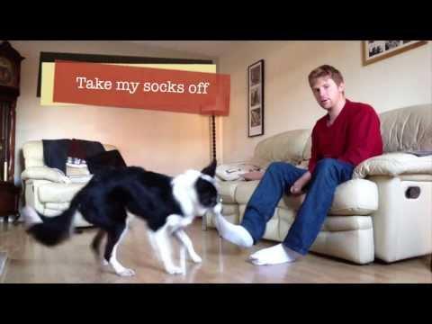 Amazing Dog Tricks - Izzy Border Collie 2