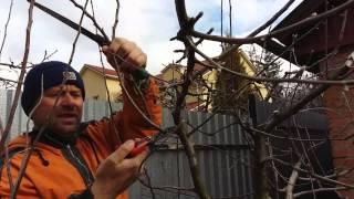 Обрезка Персика и яблони.(Этот ролик обработан в Видеоредакторе YouTube (https://www.youtube.com/editor), 2016-04-03T21:00:03.000Z)