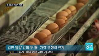 [TJB뉴스]동물복지농장 판로가 난제   폐업 사례도