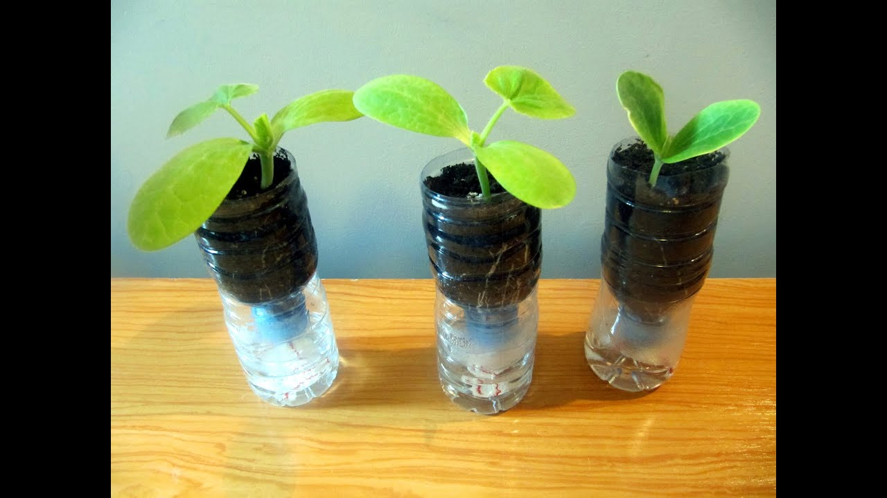 Sistema de macetas autorriego con botellas de pl stico - Macetas de plastico ...