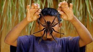 Паук поедающий птиц. Это топ 10 самых больших пауков в мире