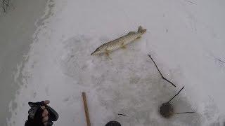Зимняя рыбалка в Астрахани.  Ловля на жерлицы и балансиры.