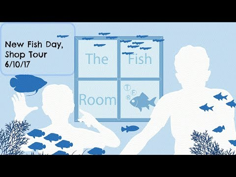 New fish day, shop tour of The Fish Room, Stoke, Nelson.