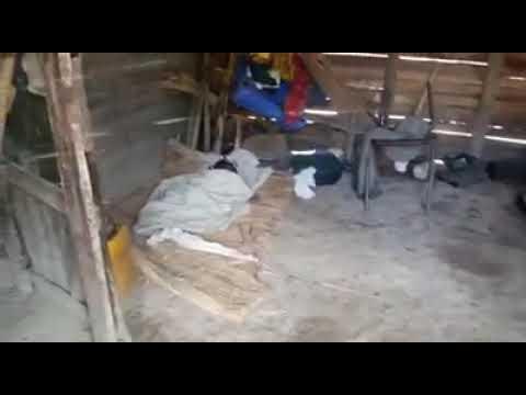 Haitiano le cortó el cuello a una niña de dos años y emprendió la huida. Ver Video
