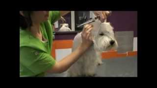 Peluquería Canina Suaves : Cómo Arreglar Caras De West Highland Terrier