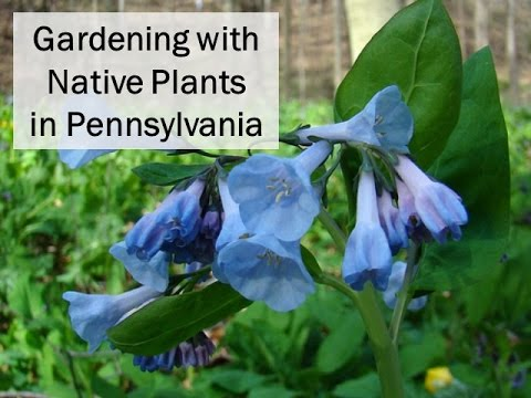 Gardening with Native Plants in Pennsylvania