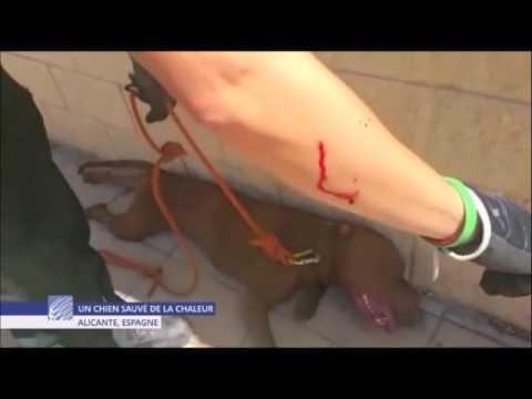 Coup de chaleur d 39 un chien souffrance agonie voiture eric tramson youtube - Symptome d un coup de chaleur ...