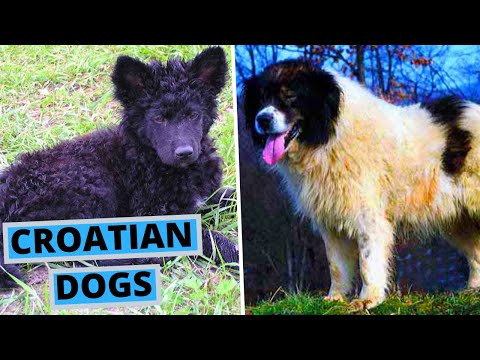 ALL Croatian Dog Breeds List