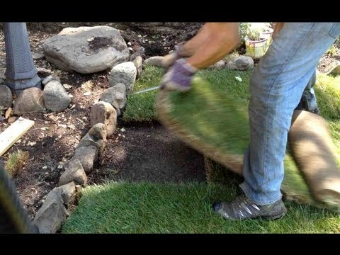 HOW TO INSTALL / REPAIR A SOD PATCH ON LAWN OR GRASS DIY!!!