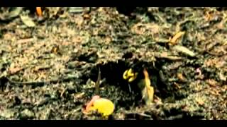 History Of The World In Two Hours Trailer 2011   Video Detective