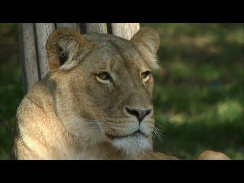 kigali zoo leipzig