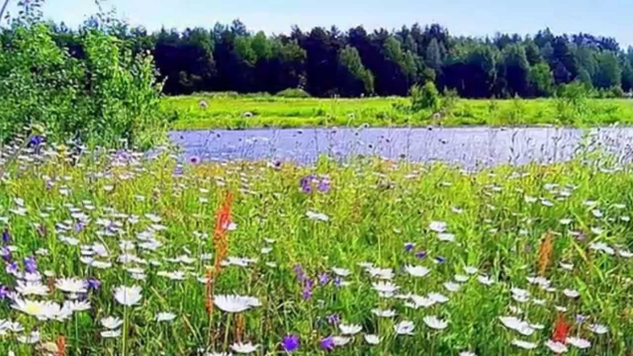 Полевые цветы слушать