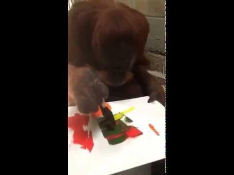 Susie, Sumatran Orangutan, Artist at Work