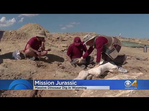 BEARDO - A massive Dino Dig is underway in Wyoming