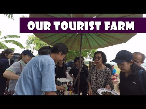 Our Tourist Farm