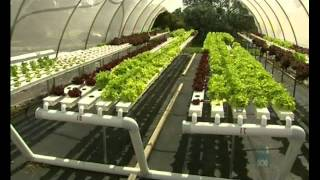 Aquaponic Integrated Farming